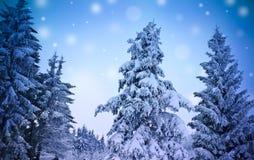 зима пейзажа Стоковое Изображение RF