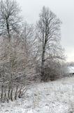 Зима первый снежок Стоковая Фотография