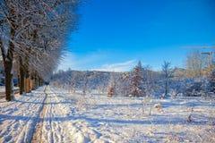 зима переулка солнечная Стоковые Изображения RF