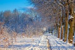 зима переулка солнечная Стоковая Фотография RF