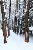 зима переулка Стоковая Фотография