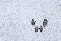 Зима покрыла долину в Spearfish, SD Следы белки в снеге Стоковое Изображение