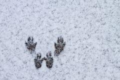 Зима покрыла долину в Spearfish, SD Следы белки Стоковое Изображение