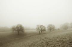 зима поля туманная Стоковое Изображение RF