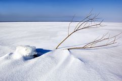 зима поля Стоковые Фото