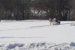 зима праздника Стоковая Фотография RF