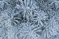 зима предпосылки Стоковые Фото