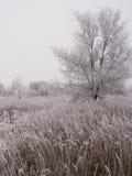 зима прерии Дакоты стоковое изображение rf