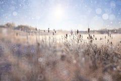 зима предпосылки с снегом Стоковые Фото