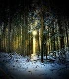 Зима - прибытие солнца к лесу Стоковое Изображение RF