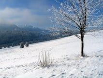 зима природы Стоковая Фотография
