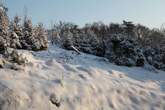 зима природы идиллии Стоковая Фотография