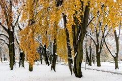 Зима приходит Стоковое Изображение