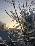 Зима пришли и ветви zaprosili стоковая фотография