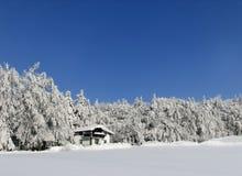 зима прогулки Стоковые Фотографии RF