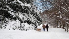 зима прогулки Стоковые Фото