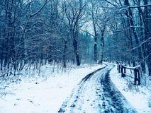 зима прогулки сынка мумии зеленой куртки отца пальто голубой крышки берета красная идя снег Стоковое Изображение