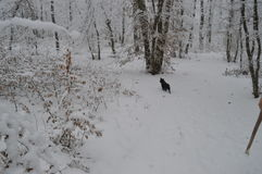 зима прогулки сынка мумии зеленой куртки отца пальто голубой крышки берета красная идя снег Стоковая Фотография