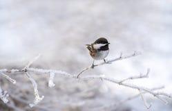 зима птицы малая стоковые изображения rf