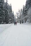 зима путя пущи Стоковое Изображение RF