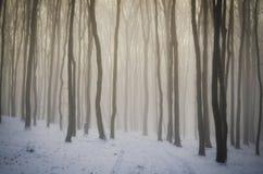 зима пущи волшебная Стоковая Фотография RF