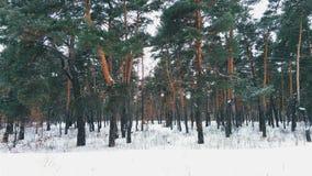 зима пущи волшебная Стоковое фото RF