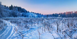 зима пущи граници Стоковое Изображение RF