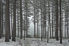 зима пущи снежная Стоковые Изображения RF