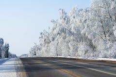 зима пущи снежная Стоковые Изображения