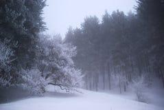зима пущи тумана Стоковые Фотографии RF