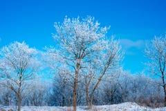 зима пущи ясного дня голубое небо Красивейший ландшафт Стоковое Изображение RF