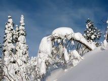 зима пущи Стоковые Изображения