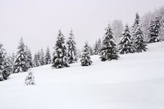 зима пущи Стоковое Изображение RF