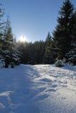 зима пущи Стоковая Фотография