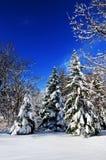 зима пущи Стоковые Изображения RF