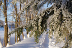 зима пущи s Стоковое Изображение