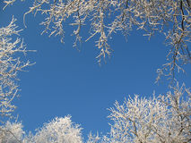 зима рамки Стоковые Фотографии RF