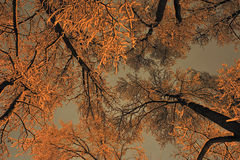 зима рамок Стоковые Изображения