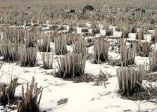 зима риса поля детали Стоковая Фотография RF