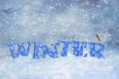 Зима Робин Стоковое Изображение