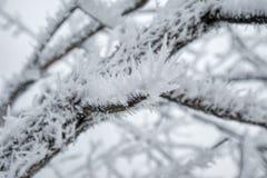 зима России ландшафта Стоковая Фотография