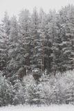 зима России пущи стоковая фотография rf