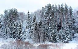 Зима России Стоковая Фотография