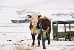 зима ряда Стоковые Фотографии RF