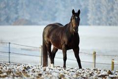 зима серии лошади Стоковое Фото
