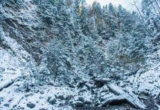 зима сказа снежка fairy пущи Стоковые Фотографии RF