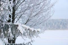 зима сказа Стоковые Изображения