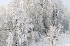 зима сказа fairy пущи Стоковые Фотографии RF