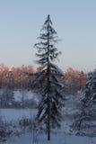 Зима снега дерева ландшафта стоковое фото