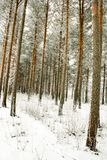 Зима, снег, в лесе Стоковая Фотография